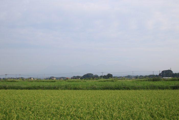 8月29日(火) AM 7:26 前橋市大前田町