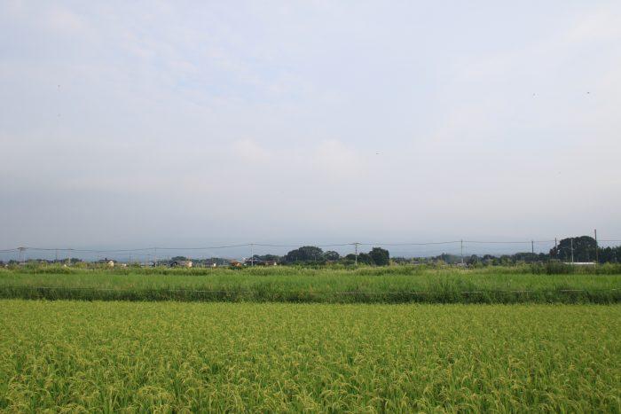 8月30日(水) AM 7:16 前橋市大前田町