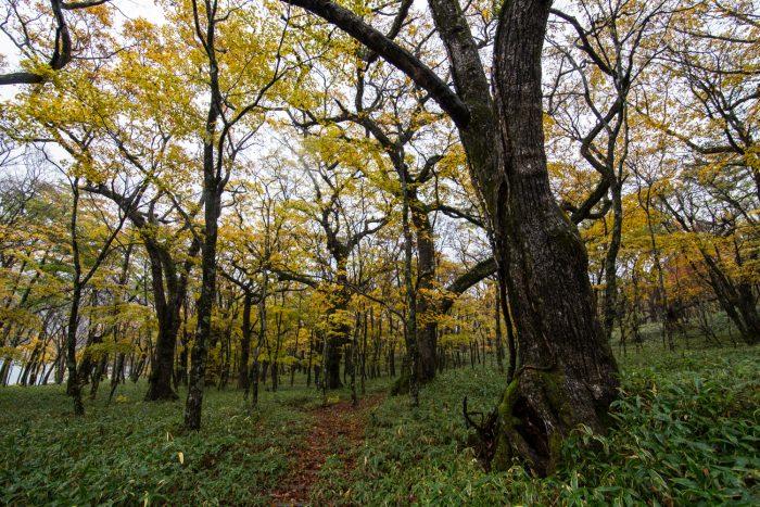 10月22日(日)の赤城大沼の紅葉