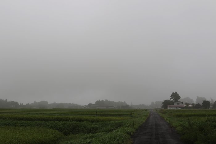 8月29日(水) AM 7:36 前橋市苗ケ島町