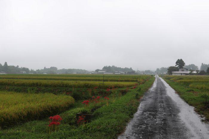 9月15日(土) AM 9:32 前橋市苗ケ島町