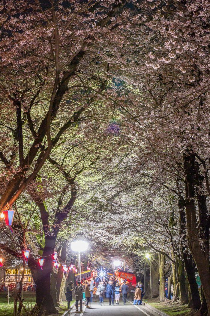 赤城南面千本桜  4/12撮影